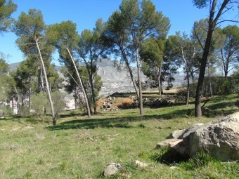 Paraje natural de Los Pinos, donde se construirá el parque periurbano. FOTO: CALMA