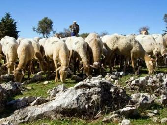Más de un centenar de ganaderos, pastores e investigadores participarán en las jornadas.