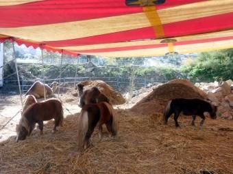 Algunos de los animales del Circo Dola Roma, instalado en Loja. FOTO: PACO CASTILLO.